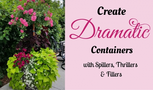 Create Dramatic Containers With Spillers, Thrillers and Fillers