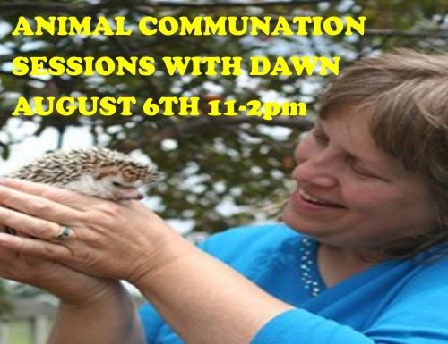 Animal Communication Sessions With Dawn