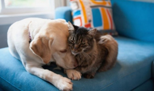 4 Facts You Must Know About Your Pet