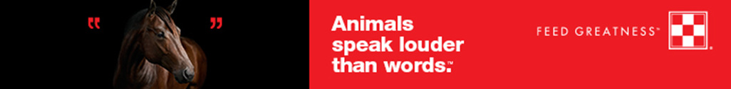 animals speak louder than words campaign